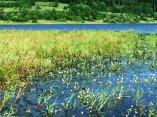 Brzeg Bukówki Wiosną